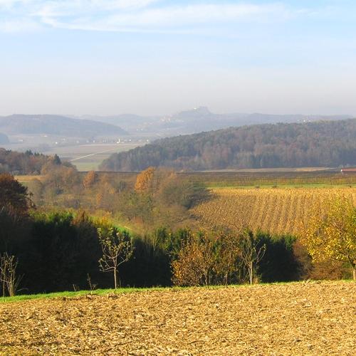 Genuss für Auge und Gaumen. Die Schwammerltour ist ein Rundweg in der Region Feldbach im Thermen- und Vulkanland Steiermark.